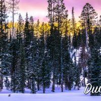 15oz-mug-bleed-snow-ridge